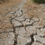 A Roma riunione della Fao per il problema mondiale dell'acqua