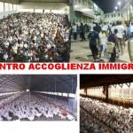 Gli immigrati nei Cei ammassati come polli